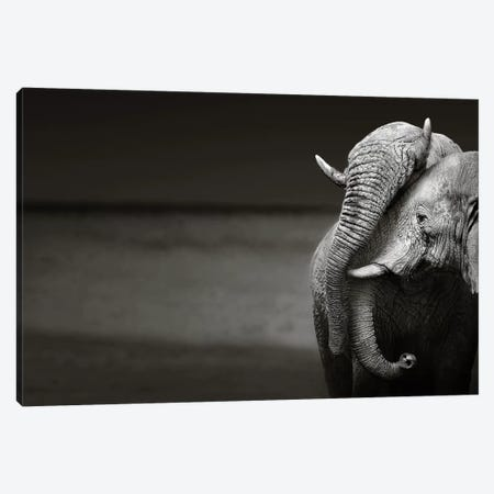 Elephants Interacting Canvas Print #JSW19} by Johan Swanepoel Canvas Art Print