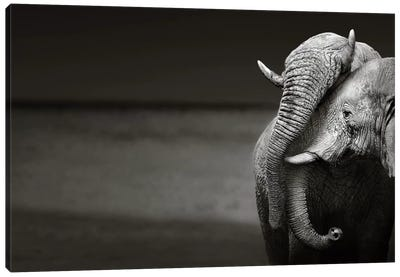 Elephants Interacting Canvas Art Print