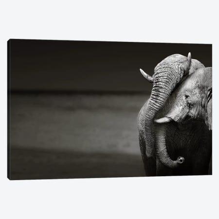 Elephants Interacting Canvas Print #JSW19} by Johan Swanepoel Canvas Art Print