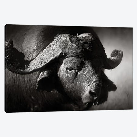 African Buffalo Portrait Canvas Print #JSW1} by Johan Swanepoel Canvas Wall Art