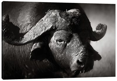 African Buffalo Portrait Canvas Art Print