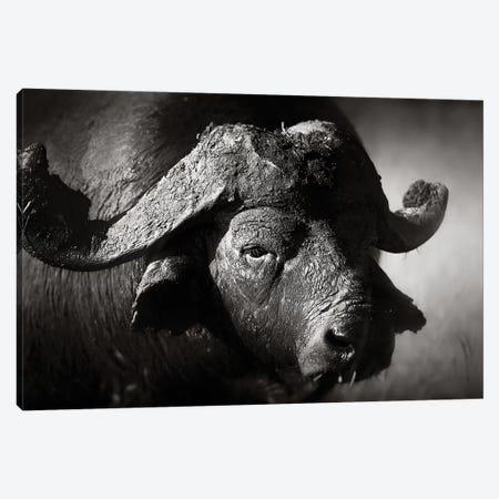 African Buffalo Portrait Canvas Print #JSW1} by Johan Swanepoel Canvas Wall Art