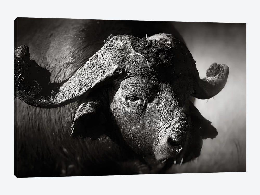 African Buffalo Portrait by Johan Swanepoel 1-piece Canvas Print
