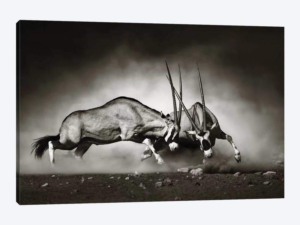 Gemsbok Fight by Johan Swanepoel 1-piece Canvas Artwork