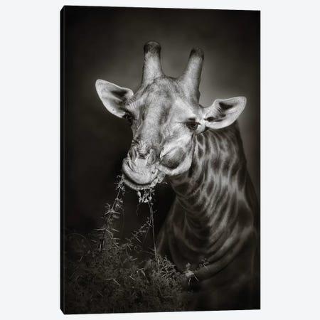 Giraffe Eating Canvas Print #JSW22} by Johan Swanepoel Canvas Artwork