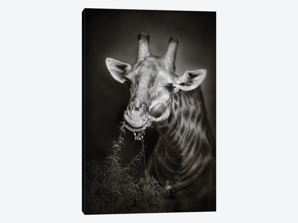 Giraffe Eating by Johan Swanepoel 1-piece Canvas Art Print