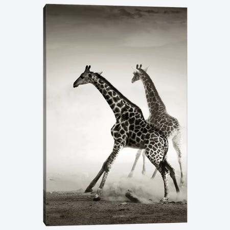 Giraffes Fleeing Canvas Print #JSW23} by Johan Swanepoel Canvas Wall Art