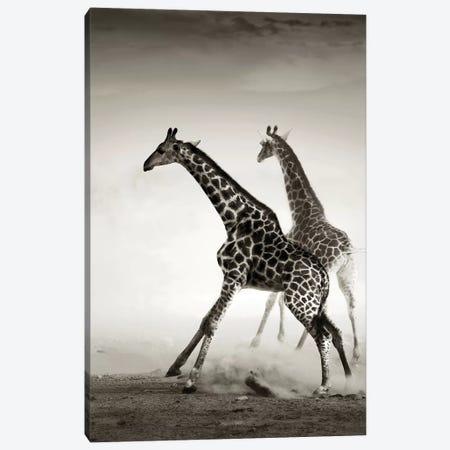 Giraffes Fleeing Canvas Print #JSW23} by Johan Swanepoel Canvas Wall Art