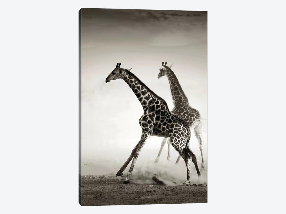 Giraffes Fleeing by Johan Swanepoel 1-piece Canvas Wall Art