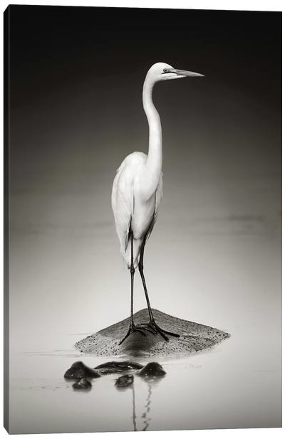 Great White Egret On Hippo Canvas Art Print