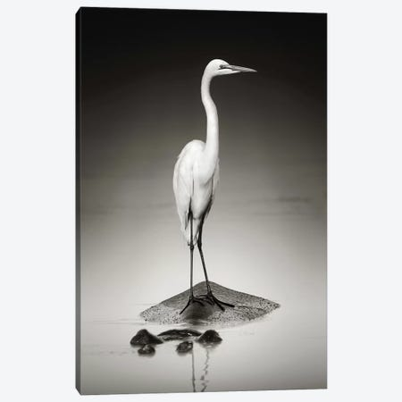 Great White Egret On Hippo Canvas Print #JSW25} by Johan Swanepoel Canvas Art Print