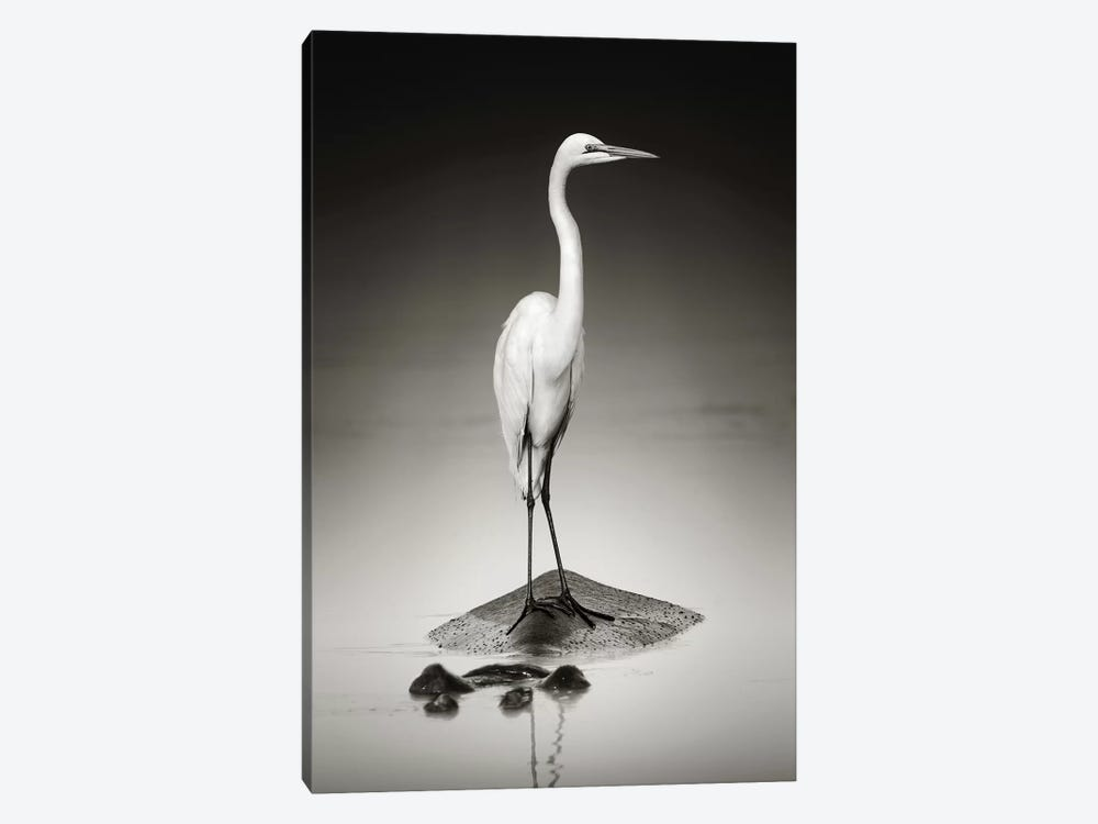 Great White Egret On Hippo by Johan Swanepoel 1-piece Canvas Wall Art