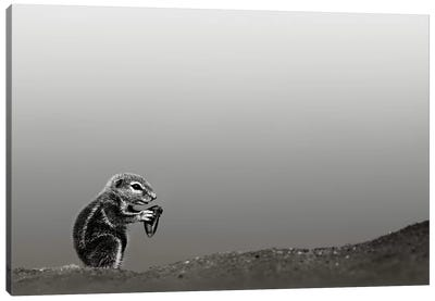 Ground Squirrel Canvas Art Print