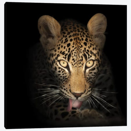 Leopard In The Dark Canvas Print #JSW29} by Johan Swanepoel Canvas Art
