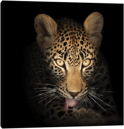 Leopard In The Dark Canvas Art Print