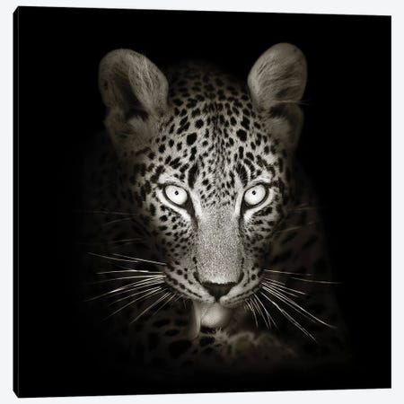 Leopard Portrait In The Dark Canvas Print #JSW30} by Johan Swanepoel Art Print