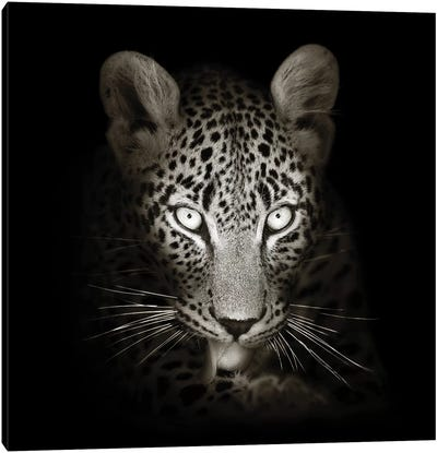 Leopard Portrait In The Dark Canvas Art Print