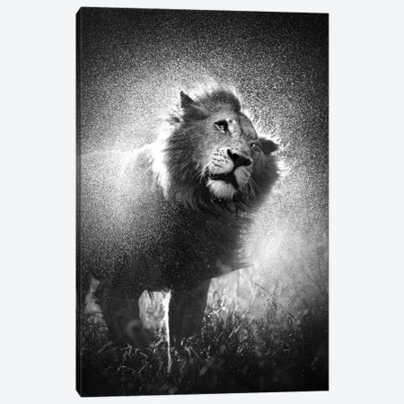 Lion Shaking Water Off Mane Canvas Print #JSW32} by Johan Swanepoel Art Print