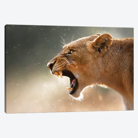 Lioness In The Rain Canvas Print #JSW33} by Johan Swanepoel Canvas Print