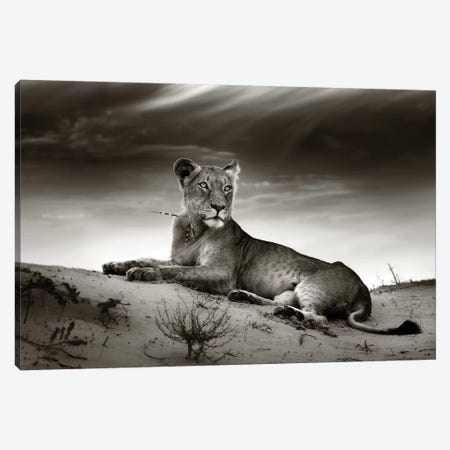 Lioness On Desert Dune Canvas Print #JSW34} by Johan Swanepoel Canvas Wall Art