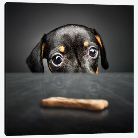 Puppy Looking For A Treat Canvas Print #JSW36} by Johan Swanepoel Canvas Wall Art