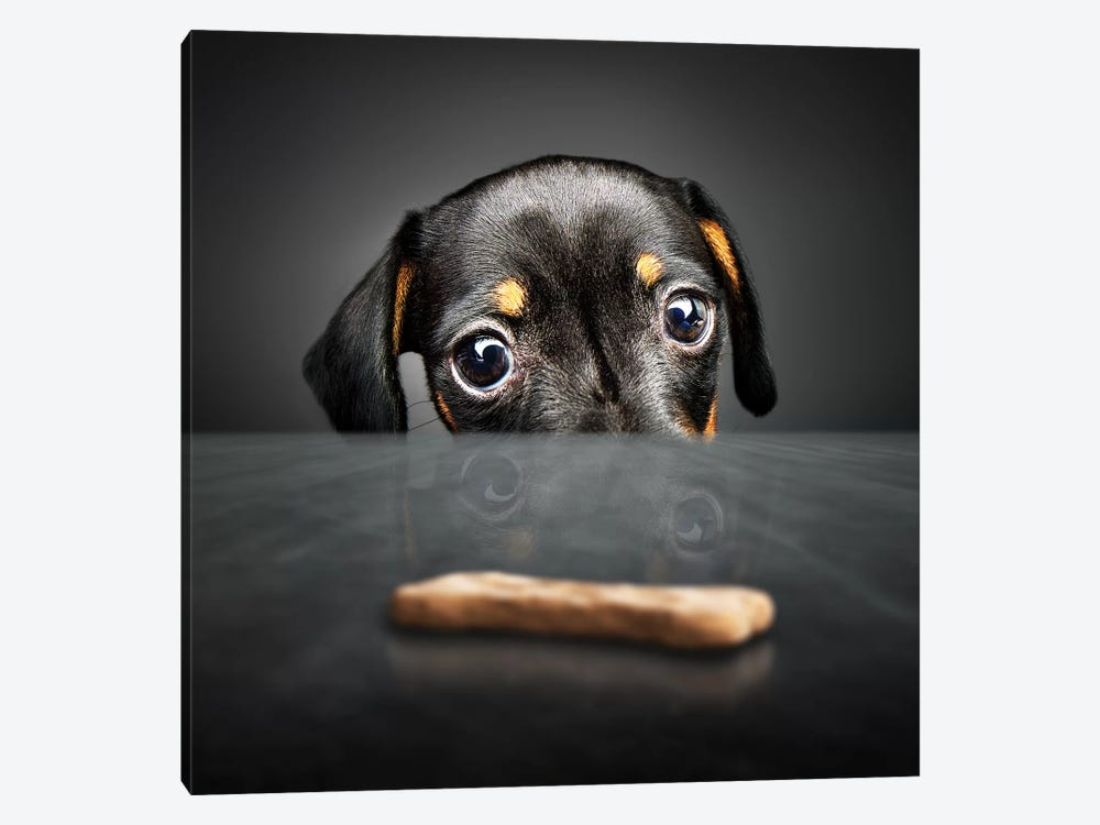 Puppy Looking For A Treat 1-piece Canvas Artwork