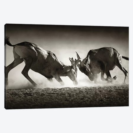 Red Hartebeast Dual In Dust Canvas Print #JSW37} by Johan Swanepoel Canvas Art