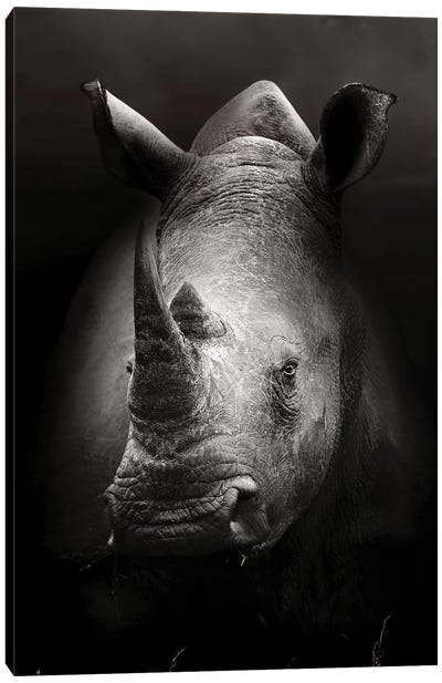 Rhinoceros Portrait Canvas Art Print