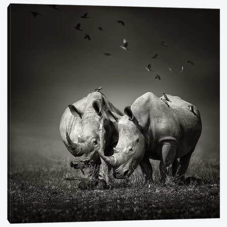 Two Rhinoceros With Birds In Black & White Canvas Print #JSW43} by Johan Swanepoel Canvas Art