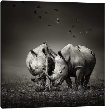 Two Rhinoceros With Birds In Black & White Canvas Art Print