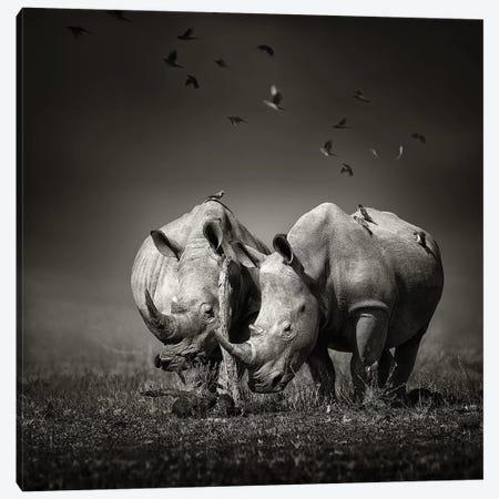 Two Rhinoceros With Birds In Black & White 3-Piece Canvas #JSW43} by Johan Swanepoel Canvas Art