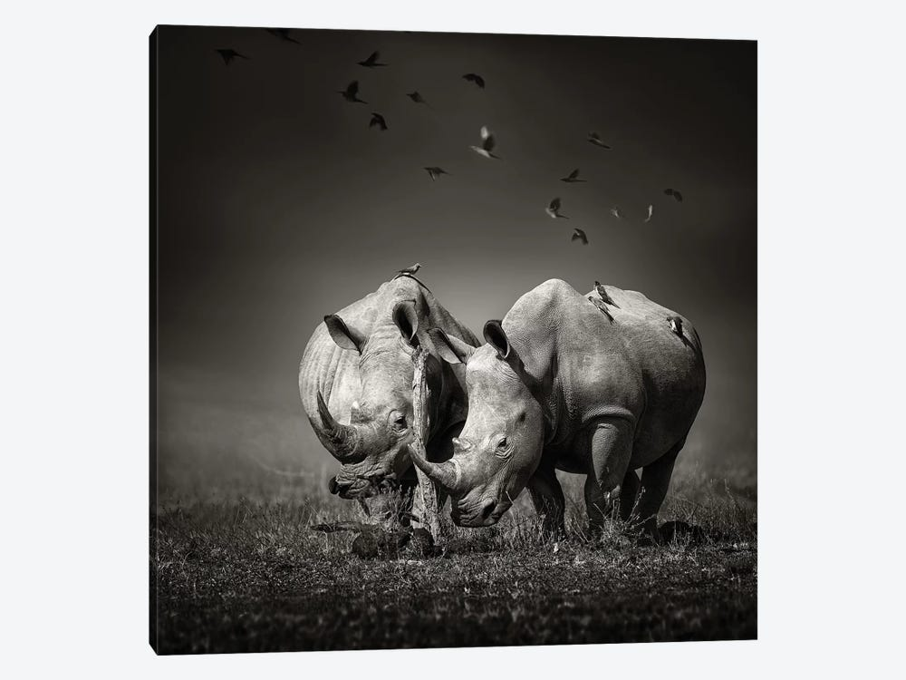 Two Rhinoceros With Birds In Black & White by Johan Swanepoel 1-piece Canvas Artwork