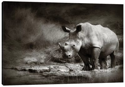 White Rhinoceros Canvas Art Print