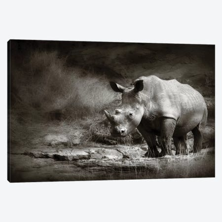 White Rhinoceros Canvas Print #JSW45} by Johan Swanepoel Canvas Art Print