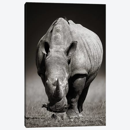 White Rhinoceros In Due-Tone Canvas Print #JSW46} by Johan Swanepoel Canvas Print