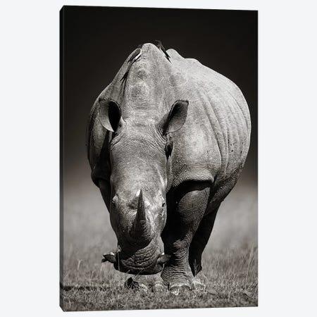 White Rhinoceros In Due-Tone Canvas Print #JSW46} by Johan Swanepoel Canvas Print