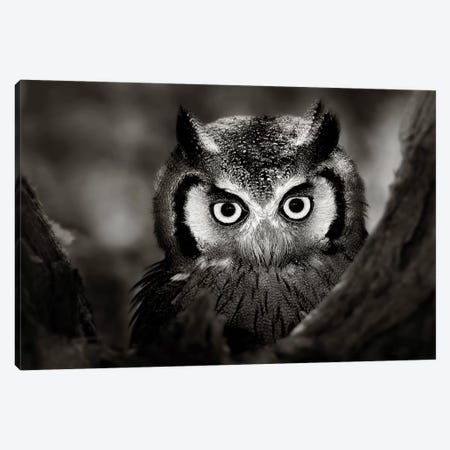Whitefaced Owl Canvas Print #JSW47} by Johan Swanepoel Art Print