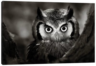 Whitefaced Owl Canvas Art Print