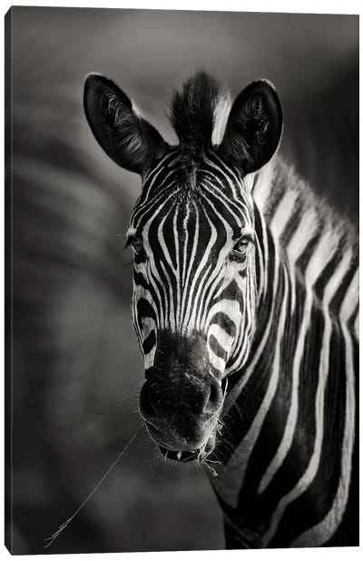 Zebra Portrait Close-Up Canvas Art Print