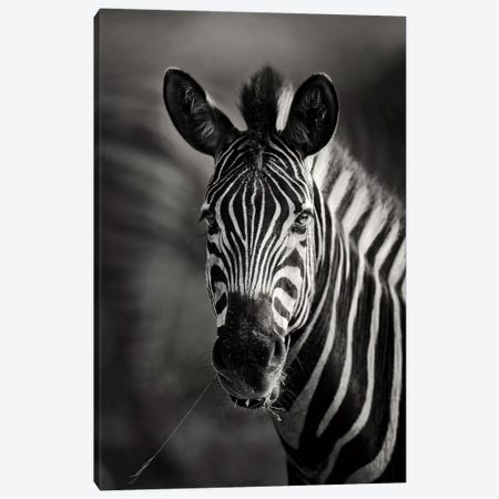 Zebra Portrait Close-Up Canvas Print #JSW48} by Johan Swanepoel Canvas Art