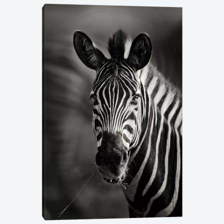 Zebra Portrait Close-Up Canvas Print #JSW48} by Johan Swanepoel Canvas Art