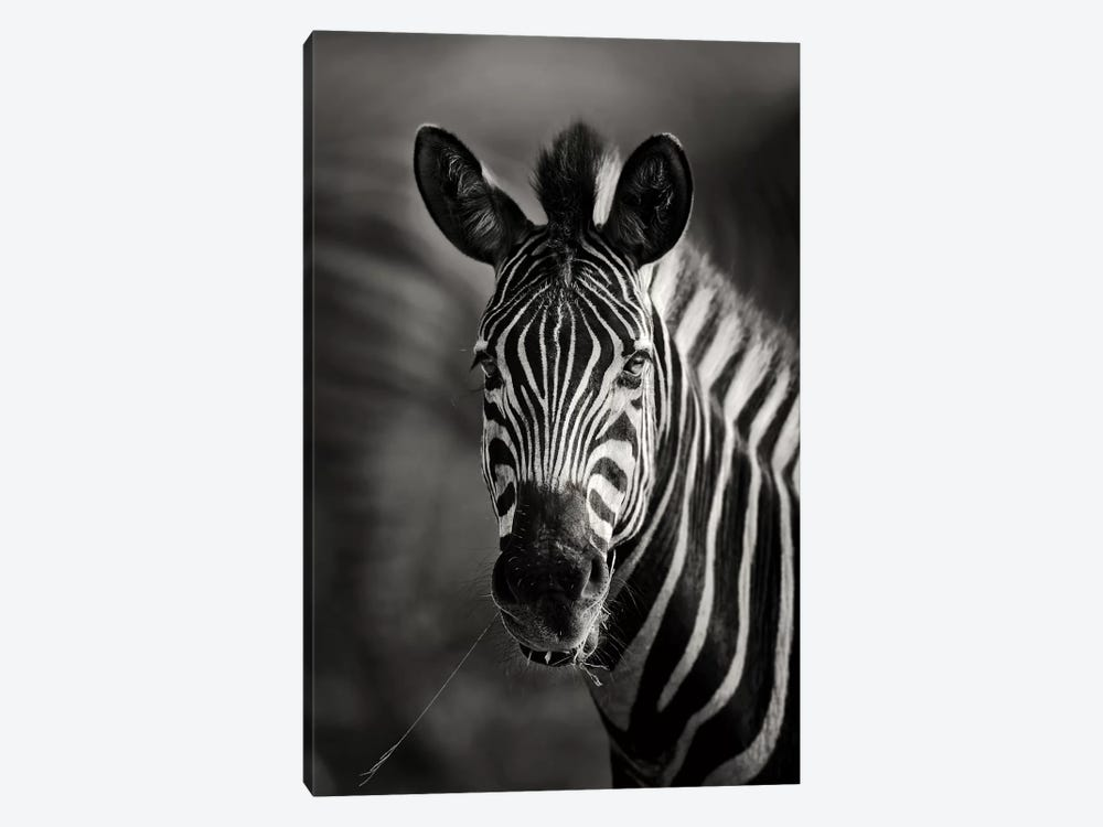 Zebra Portrait Close-Up by Johan Swanepoel 1-piece Art Print