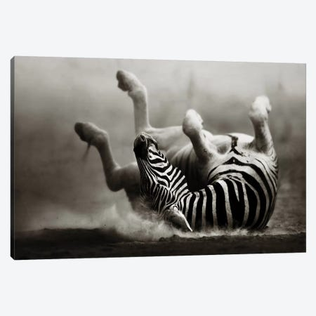 Zebras Rolling In The Dust Canvas Print #JSW49} by Johan Swanepoel Canvas Art