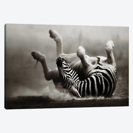 Zebras Rolling In The Dust Canvas Print #JSW49} by Johan Swanepoel Canvas Art