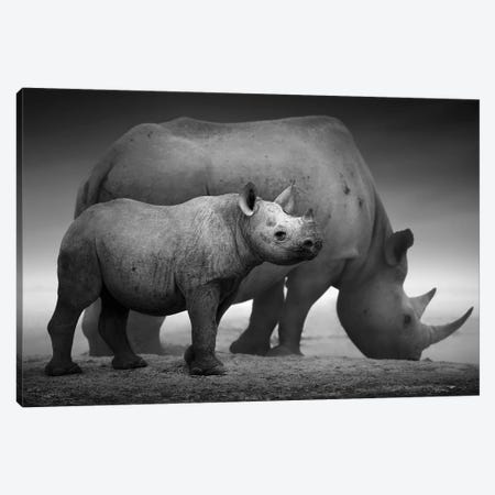 Black Rhino Calf And Cow Canvas Print #JSW4} by Johan Swanepoel Art Print