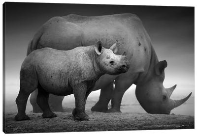 Black Rhino Calf And Cow Canvas Art Print