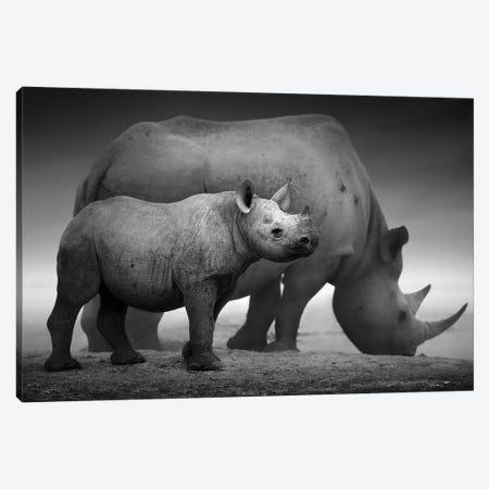 Black Rhino Calf And Cow Canvas Print #JSW4} by Johan Swanepoel Art Print