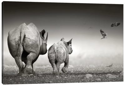 Black Rhino Cow With Calf Canvas Art Print