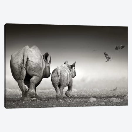 Black Rhino Cow With Calf Canvas Print #JSW5} by Johan Swanepoel Art Print