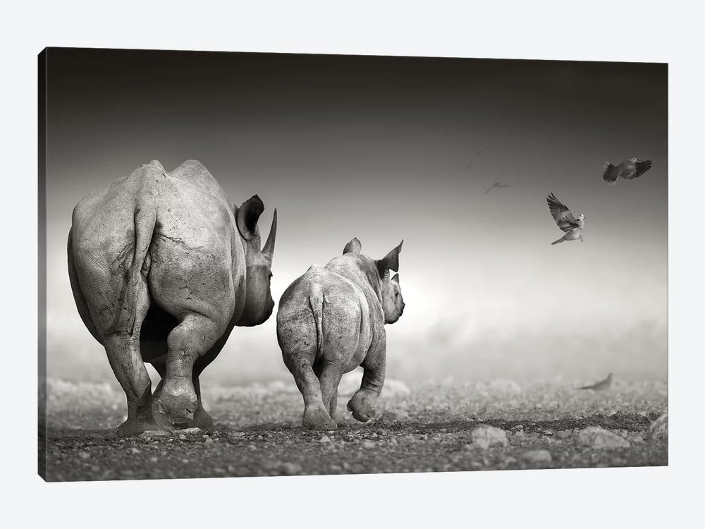 Black Rhino Cow With Calf by Johan Swanepoel 1-piece Canvas Print